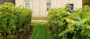 Vineyards and Barn, Lowrey Vineyards, St. David's Bench